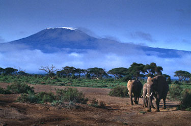 Kilimandžaro kalnas