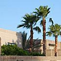 Palmės, vasara, karštis