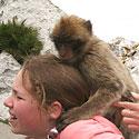 Gibraltaras, Beždžionių draustinis
