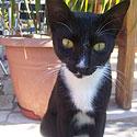 Katė iš Kretos