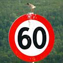 Paukštelis ant kelio ženklo