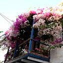 Gražioji Paros sala Graikijoje