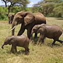 Šeimyninė dramblių idilė