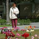 Tulpių žydėjimo šventė