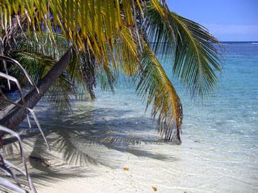 Palmių paunksmė