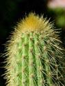 Kaktusai_2