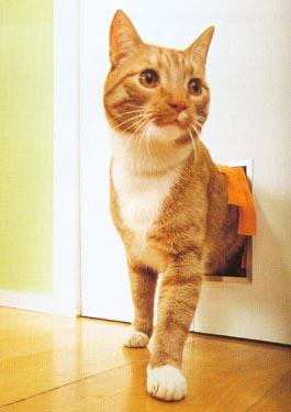 Specialus įėjimas katei, įrengtas duryse