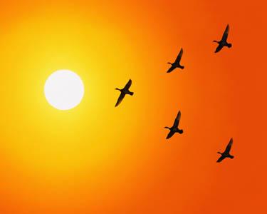 saulė, paukščiai skrenda, dangus, karštis, vasara
