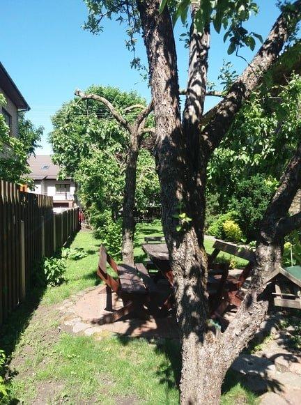 Medžiai sodyboje