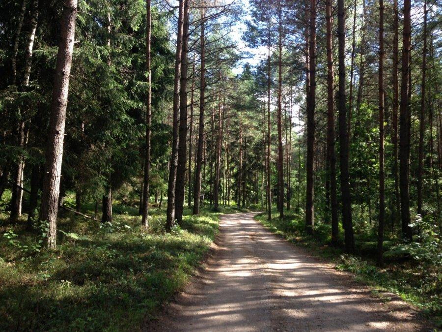 Miške galima rinkti tik nukritusias šakas