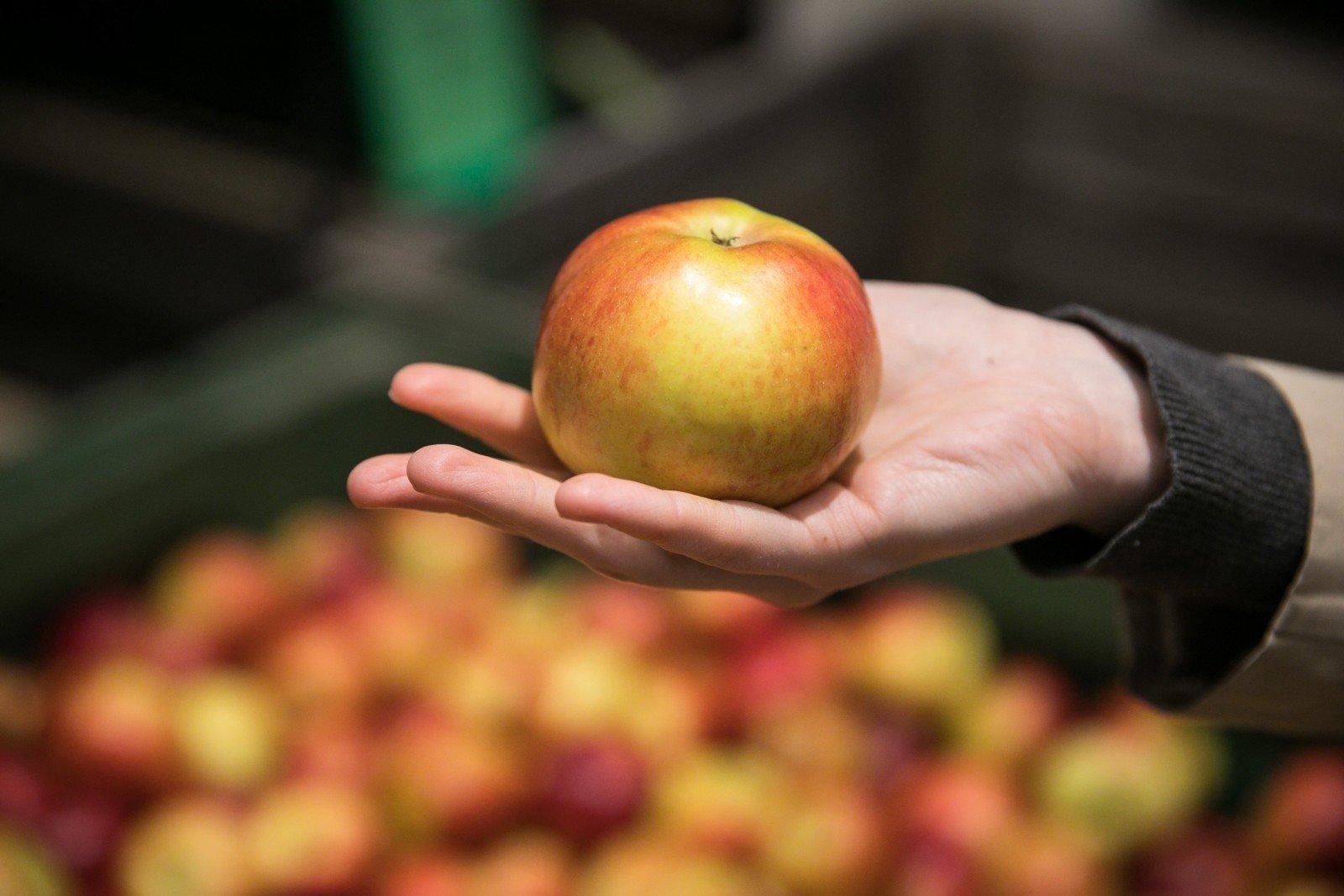 obuoliai nuo hipertenzijos)