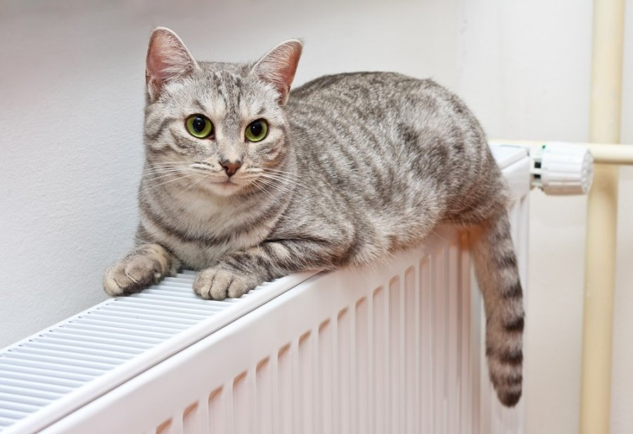 dar galite susp ti pasikeisti radiatorius specialist. Black Bedroom Furniture Sets. Home Design Ideas