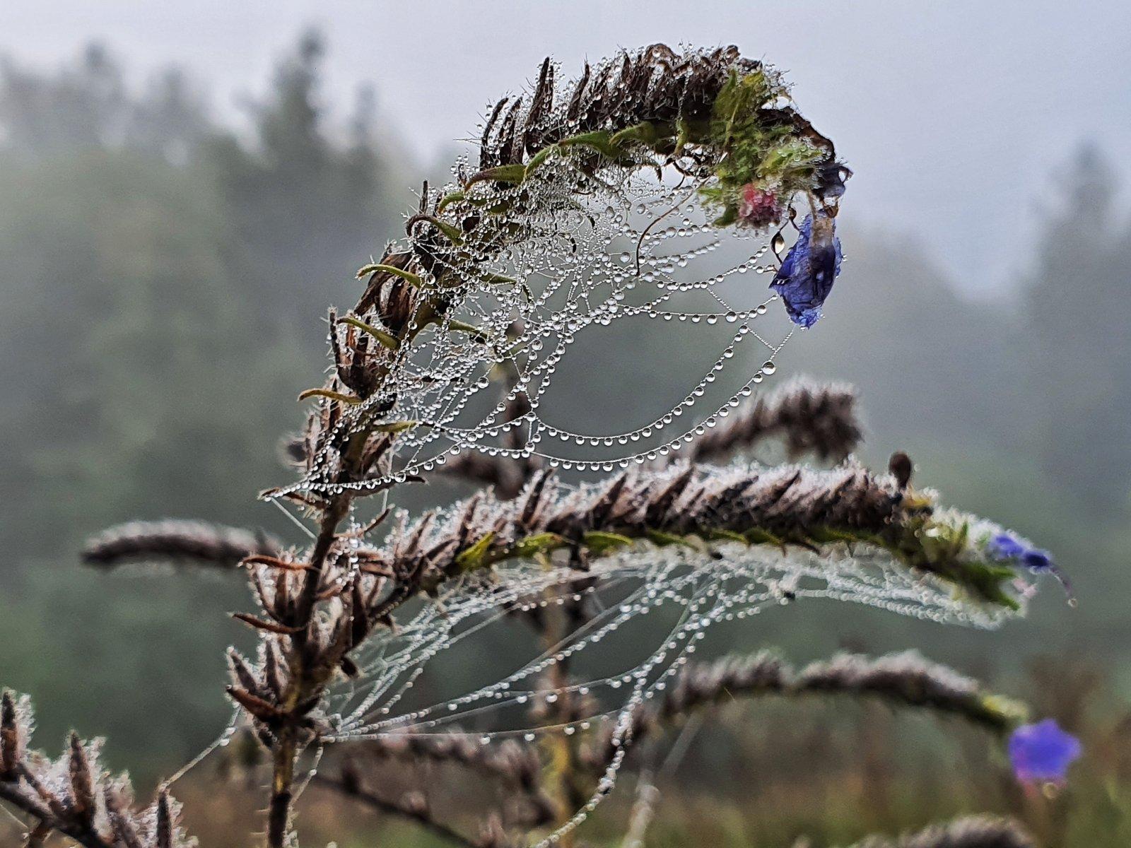 На этой неделе максимальная температура в Болгарии будет между 15° и 18°