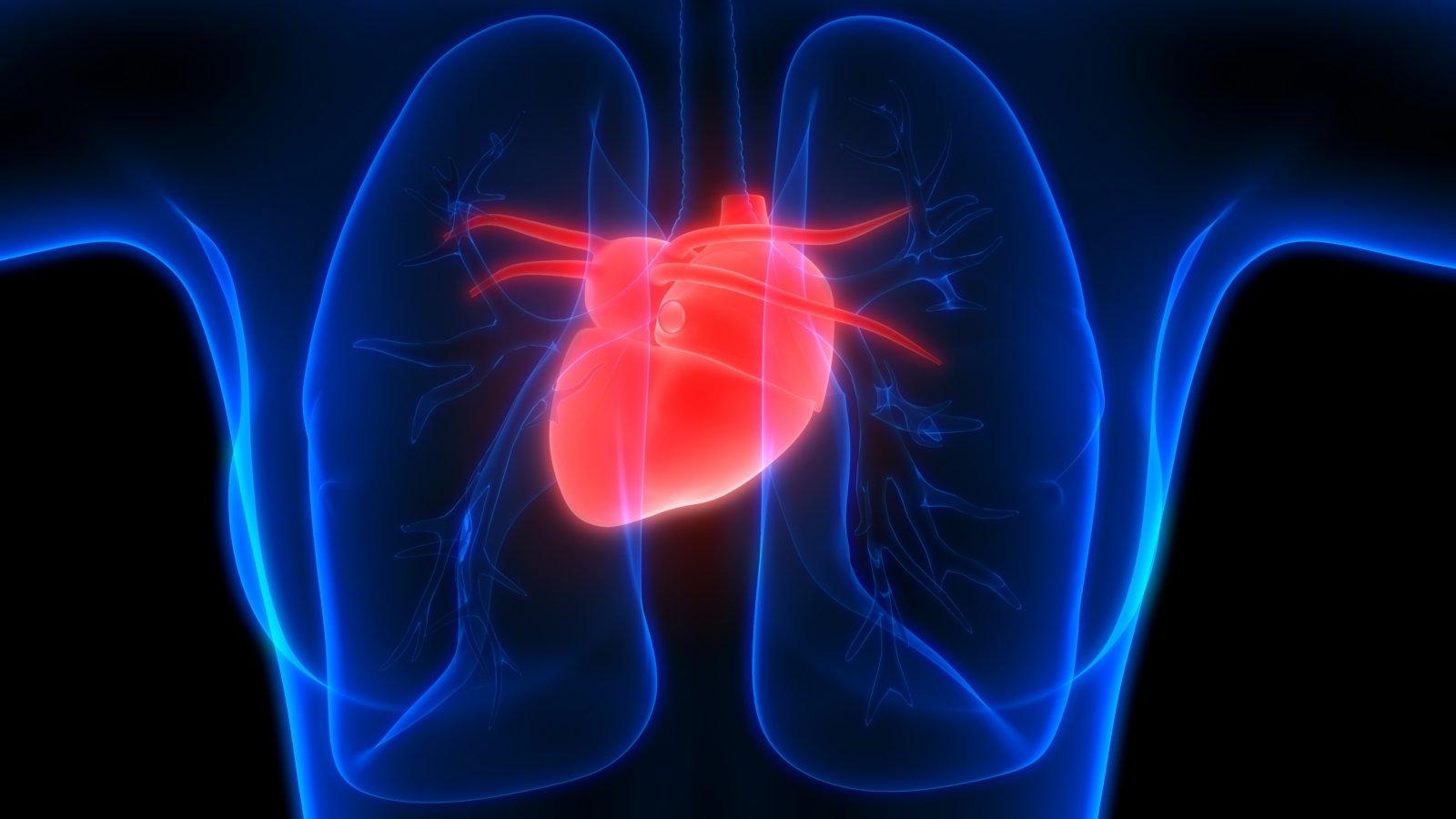 Trumpai apie širdies ir kraujagyslių ligų prevencijos programą