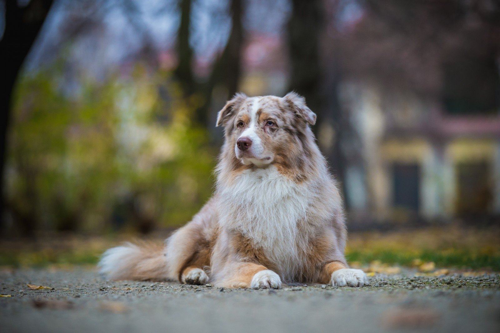 Šuns svorio sąlygos | Hill's Pet