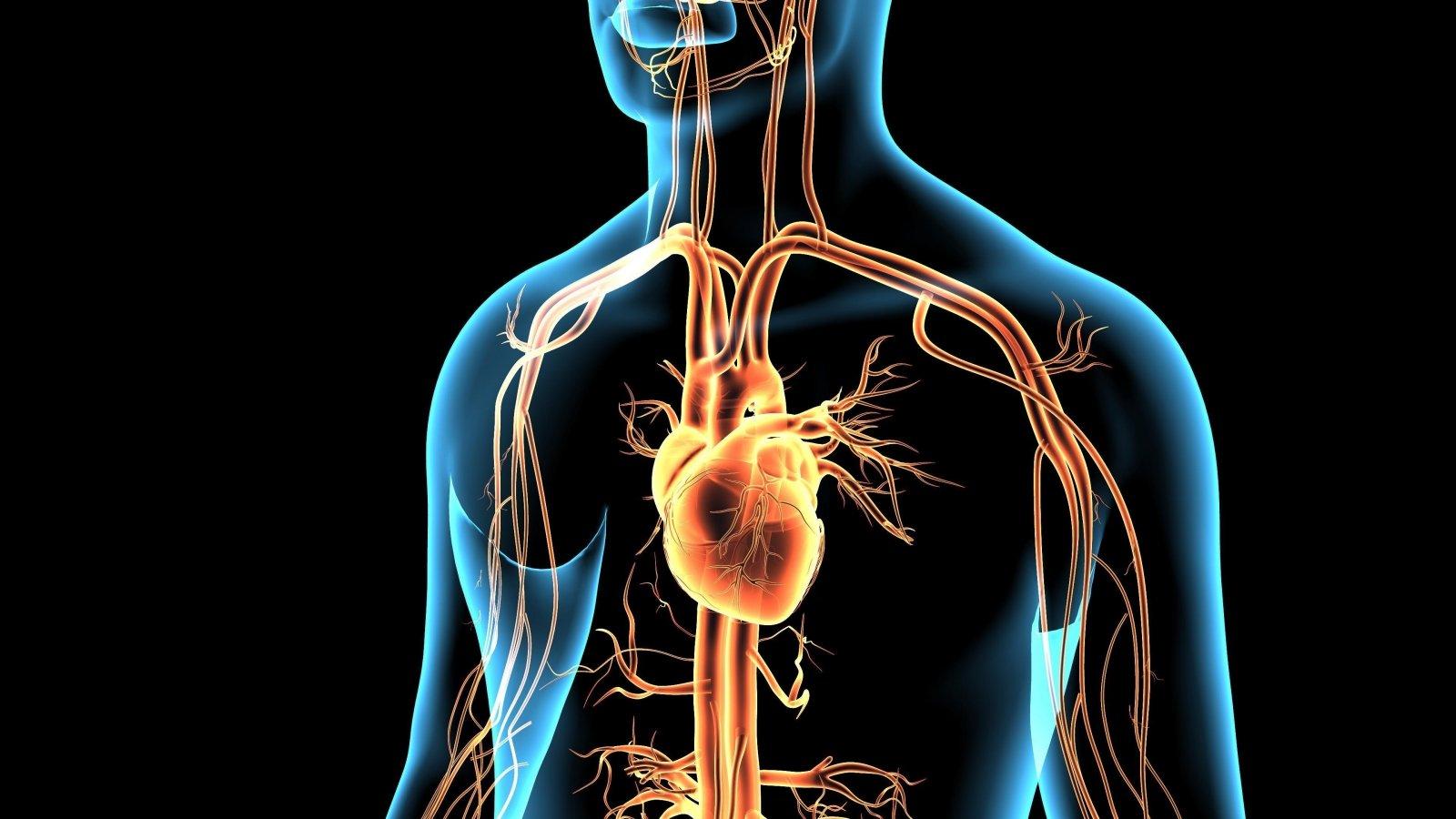 kraujagyslių gydymas hipertenzijai gydyti)