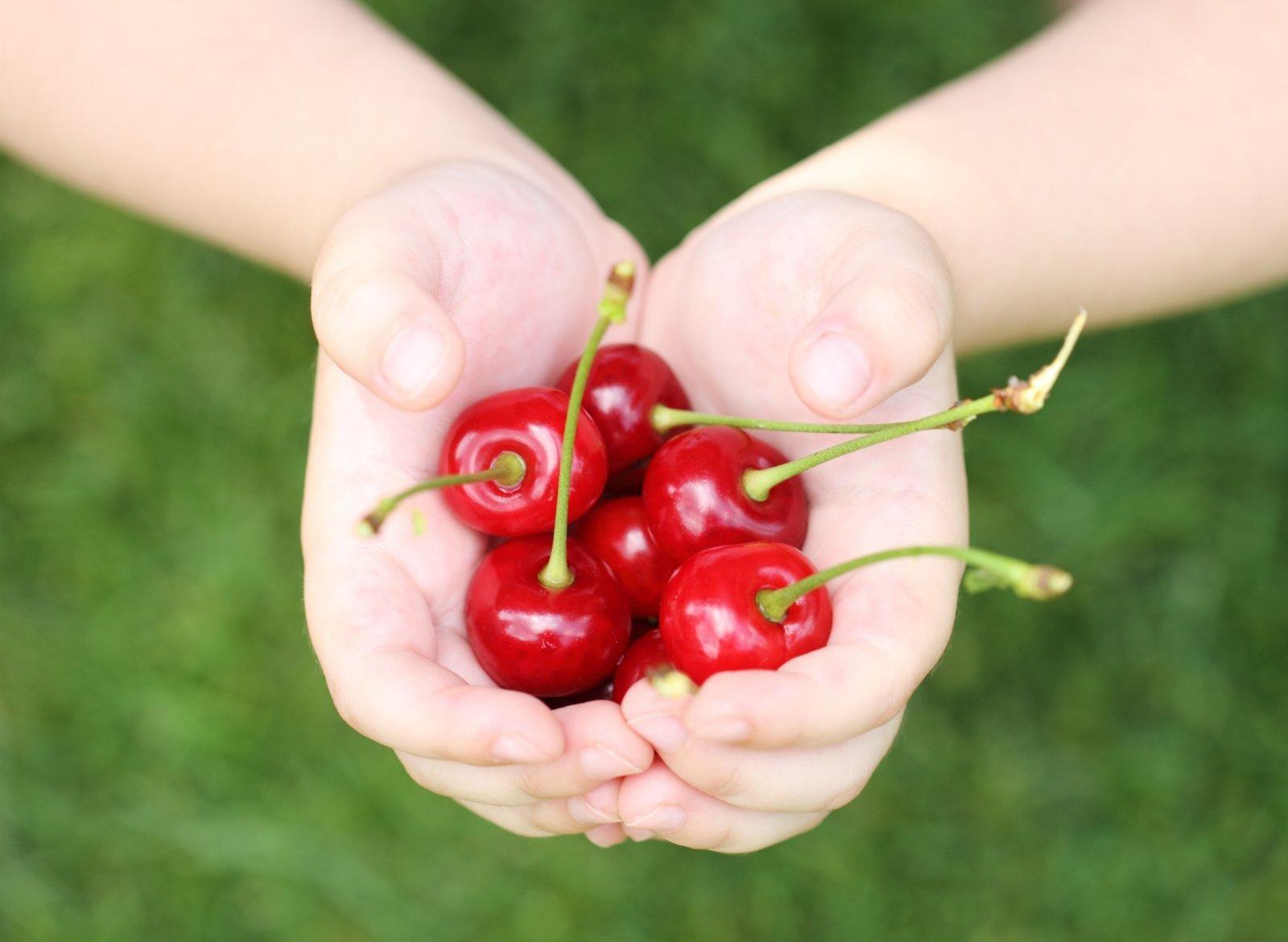 Lietuviškos vyšnios ir trešnės – rasti galima ne bet kur - DELFI Verslas