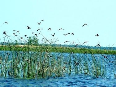Žuvinto ežeras